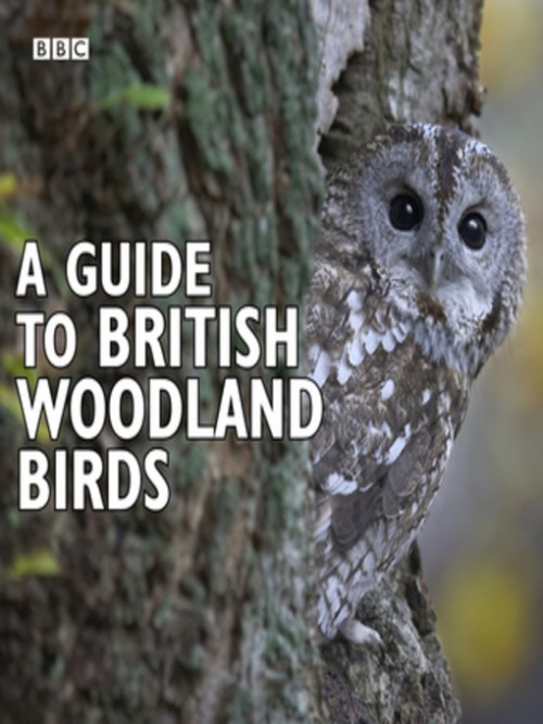 A Guide To British Woodland Birds Cover